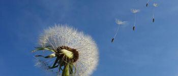 Fête de la science en Brocéliande: Conférence \\Les pollinisateurs sauvages en Bretagne\\ Concoret