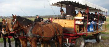 Balade en attelage \Les marais de l\Elle, au rythme des chevaux\ Isigny-sur-Mer