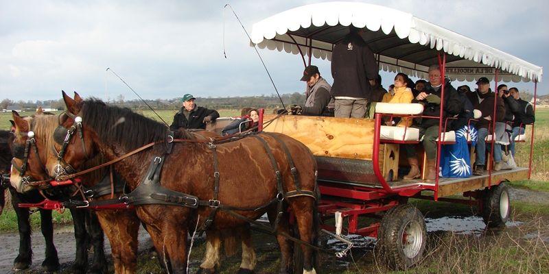 Balade en attelage Les marais de lElle, au rythme des chevaux