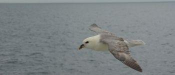 Sortie ornithologique « Les oiseaux des falaises » Vierville-sur-Mer