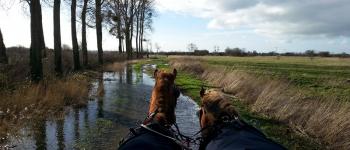 Balade en attelage \Marais et patrimoine, au rythme des chevaux\ Trévières