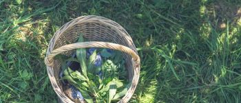 Dégustation de plantes sauvages ! Méry-Bissières-en-Auge