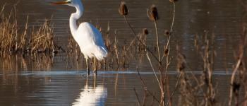 Le secret des marais de Villers-Blonville Villers-sur-Mer