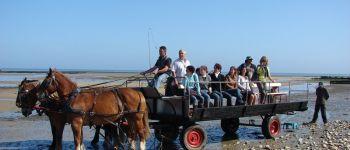 Balade en attelage \Les parcs à huîtres de la baie des Veys, au rythme des chevaux\ Grandcamp-Maisy