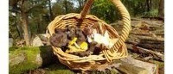 Sortie nature : les champignons Bagnoles-de-lOrne-Normandie