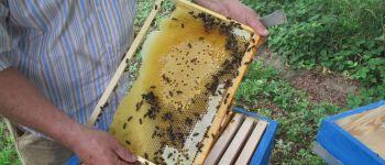 Extraction de miel, démonstration de savoir-faire Barenton