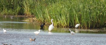 Des marais à découvrir Carentan-les-Marais