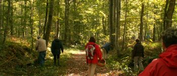 Les animaux de la forêt de Cerisy Montfiquet