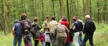 Les arbres et la gestion forestière en forêt de Cerisy Montfiquet