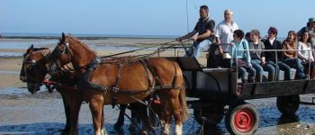 Balade en attelage « Les parcs à huîtres de la Baie des Veys » Grandcamp-Maisy