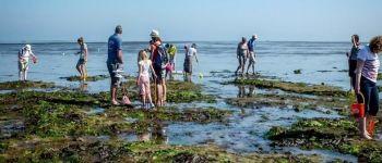 Balade découverte littorale Saint-Aubin-sur-Mer