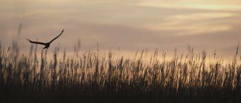 Les crépusculaires Carentan-les-Marais