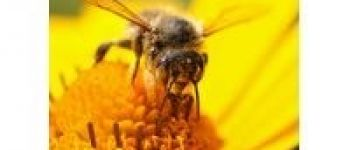 Découverte apicole : le rucher de la forêt d'Andaine Bagnoles-de-lOrne-Normandie