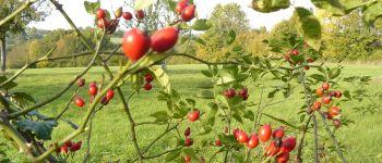 Balade découverte «les vertus des plantes sauvages» Blangy-le-Château