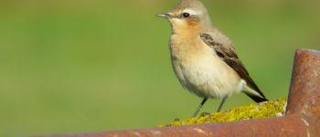 « Les oiseaux, une histoire de migration ! » Sortie ornithologique. Benerville-sur-Mer