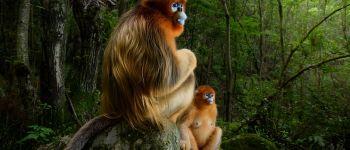 Visite commentée de l\exposition \Wildlife Photographer of the Year\ Elbeuf