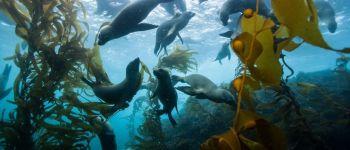 « Océan » documentaire projeté au Scriptorial Avranches